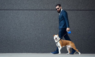 How To Train Your Puppy To Stay Fashionable With Men
